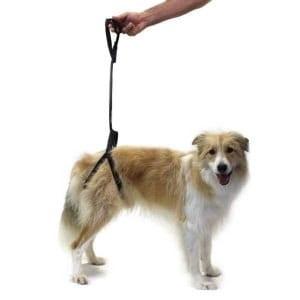 Sconti Imbracature di base per cani