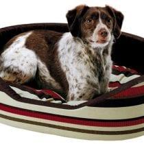Classifica migliori accessori per cani: classifica e offerte