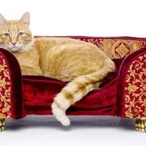 Migliori accessori per gatti: guida all' acquisto e offerte