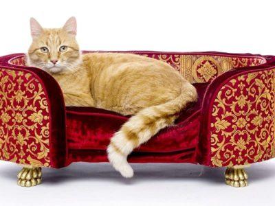 Consigli accessori per gatti