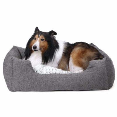 Sconti cuscini risalzati per veicoli per cani