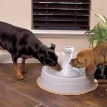 Migliori fontane per cani: guida all' acquisto e offerte