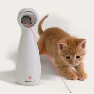 Consigli giochi laser per gatti