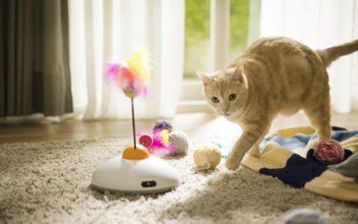 Consigli giochi per gatti
