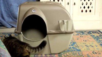 Consigli lettiere autopulenti per gatti