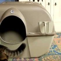 Migliori lettiere autopulenti per gatti: classifica e offerte