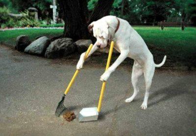 Sconti sacchetti escrementi per cani