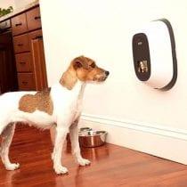 Classifica migliori regali per un cane: idee e guida all' acquisto
