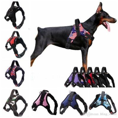 migliori accessori cani
