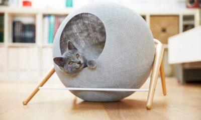 Top 5 accessori gatti: recensioni, offerte, guida all' acquisto di Agosto 2019