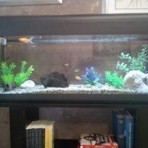 Classifica acquari 100 litri: opinioni, offerte, i bestseller