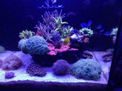 acquari marini completi in sconto