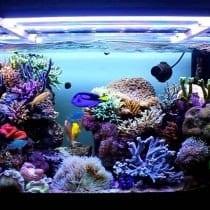 Classifica acquari marini: alternative, offerte, guida all' acquisto