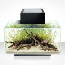 Classifica acquari moderni: recensioni, offerte, guida all' acquisto