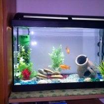 Top 5 acquari per pesci rossi: recensioni, offerte, la nostra selezione