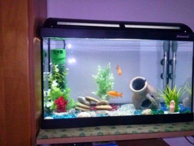 acquari per pesci rossi in offerta
