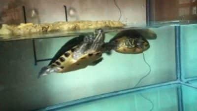 acquari per tartarughe d'acqua occasioni