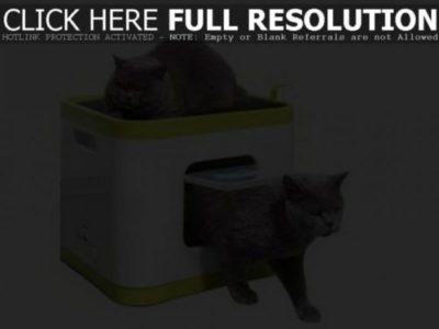 miglior cassette per gatto