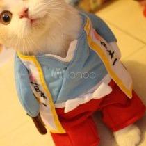 Scegli il miglior costume per gatto: opinioni, offerte, nuovi modelli
