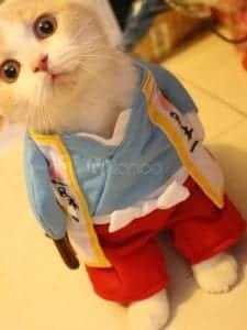 Miglior costume per gatto