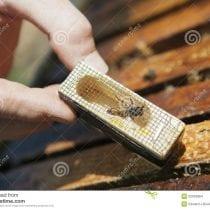 🏆Classifica gabbie ape regina: alternative, offerte, la nostra selezione