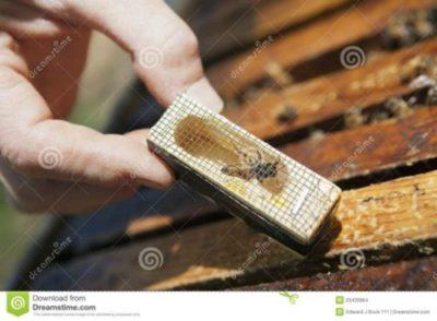 sconto gabbie ape regina