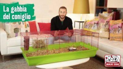 miglior gabbie coniglio nano
