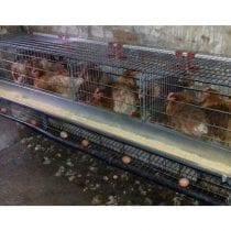 🏆Classifica gabbie galline ovaiole: recensioni, offerte, guida all' acquisto