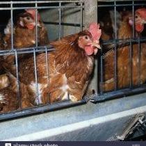 🏆Top 6 gabbie galline piccola: recensioni, offerte, la nostra selezione
