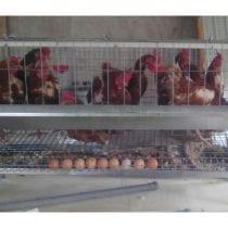 🏆Top 6 gabbie galline: recensioni, offerte, guida all' acquisto