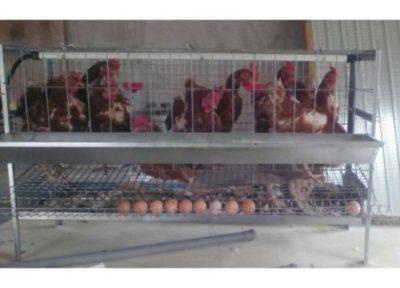 sconto gabbie galline