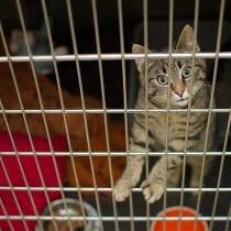🏆Migliori gabbie metallo gatto: alternative, offerte, la nostra selezione