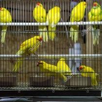 🏆Top 6 gabbie ornamentali uccelli: opinioni, offerte, la nostra selezione