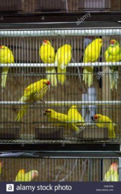 prezzi gabbie ornamentali uccelli