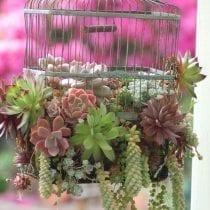 🏆Classifica gabbie ornamentali: alternative, offerte, la nostra selezione