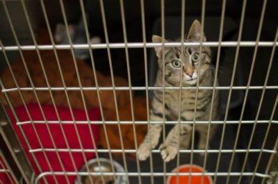 offerta gabbie per gatti