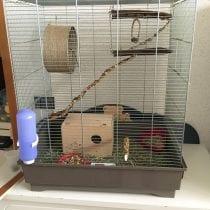 🏆Migliori gabbie scoiattolo accessori: alternative, offerte, guida all' acquisto