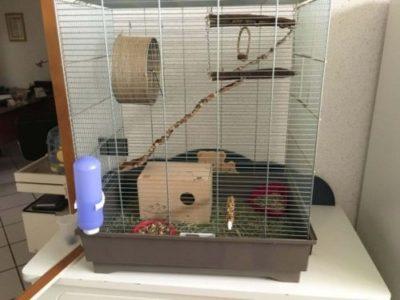 sconto gabbie scoiattolo accessori
