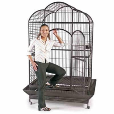 miglior gabbie voliera pappagalli