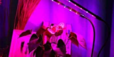promozione lampade per piante