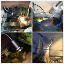 🥇Top 5 lampade uvb tartarughe: recensioni, prezzi, offerte, le bestsellers