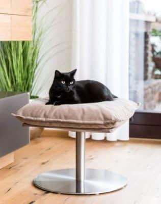 miglior lettino per gatti