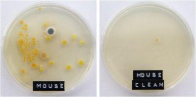 Rilevatore di batteri e germi: offerte