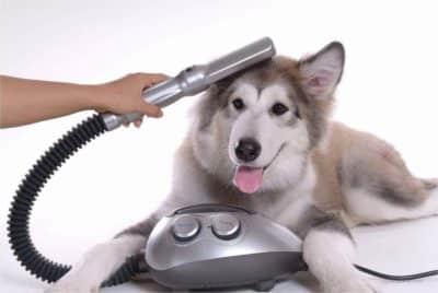 miglior soffiatore cani