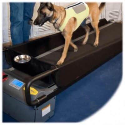 tapis roulant per cani prezzi