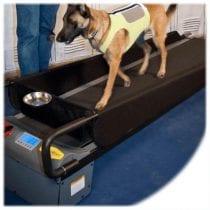 🏃♂️Classifica tapis roulant per cani: opinioni, offerte. La nostra selezione