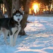 🏆Classifica tende husky: opinioni, offerte, la nostra selezione