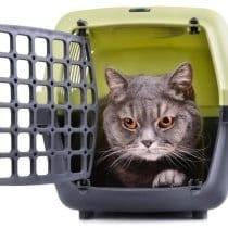 🏆Top 5 trasportino gatto aereo: alternative, offerte, guida all' acquisto