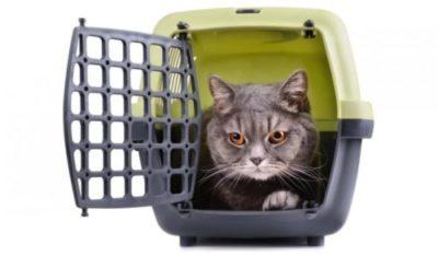 miglior trasportino gatto aereo