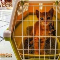 🏆Miglior trasportino lettiera gatto: alternative, offerte, scegli il migliore!